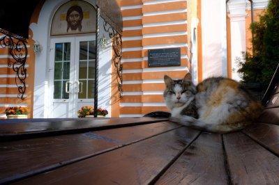 Оттенки доброты: молебен о бездомных животных 10043